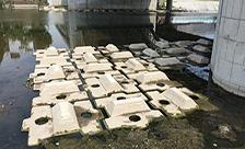 京都府京都市鴨川