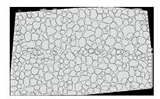 アニーヴンポーラススプリットン水藻